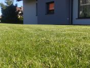 lawns from turf Cracow, watering lawns ,  irigation systems,  lawns care